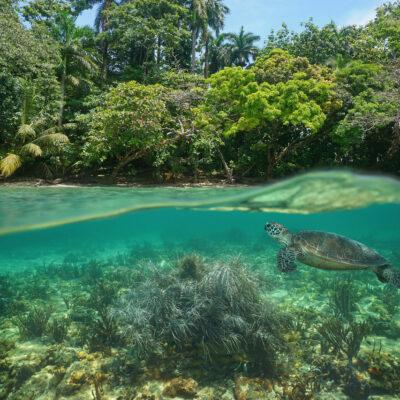Plongée sous marine Bocas del Toro