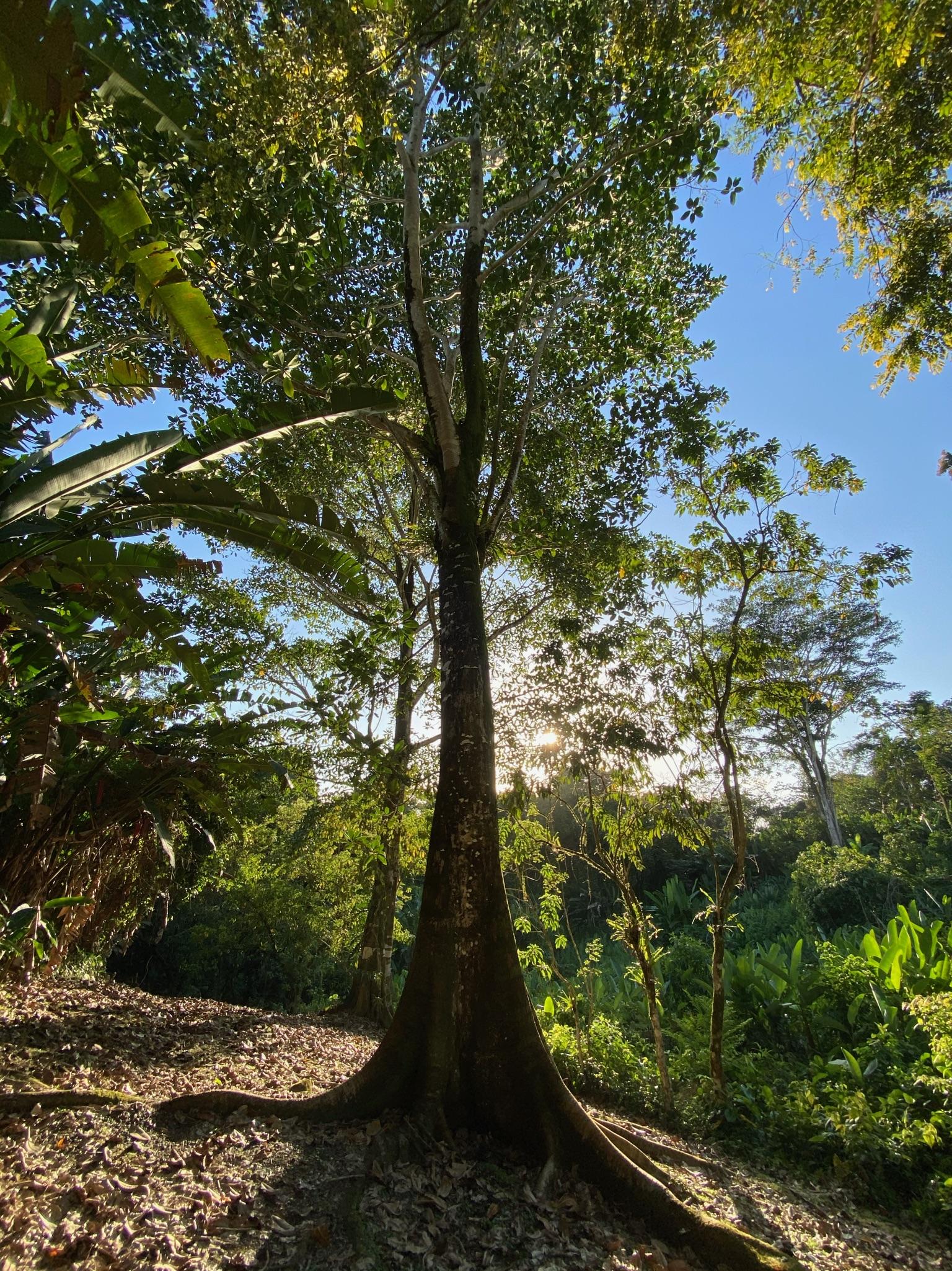 visit jungle Isla pastores