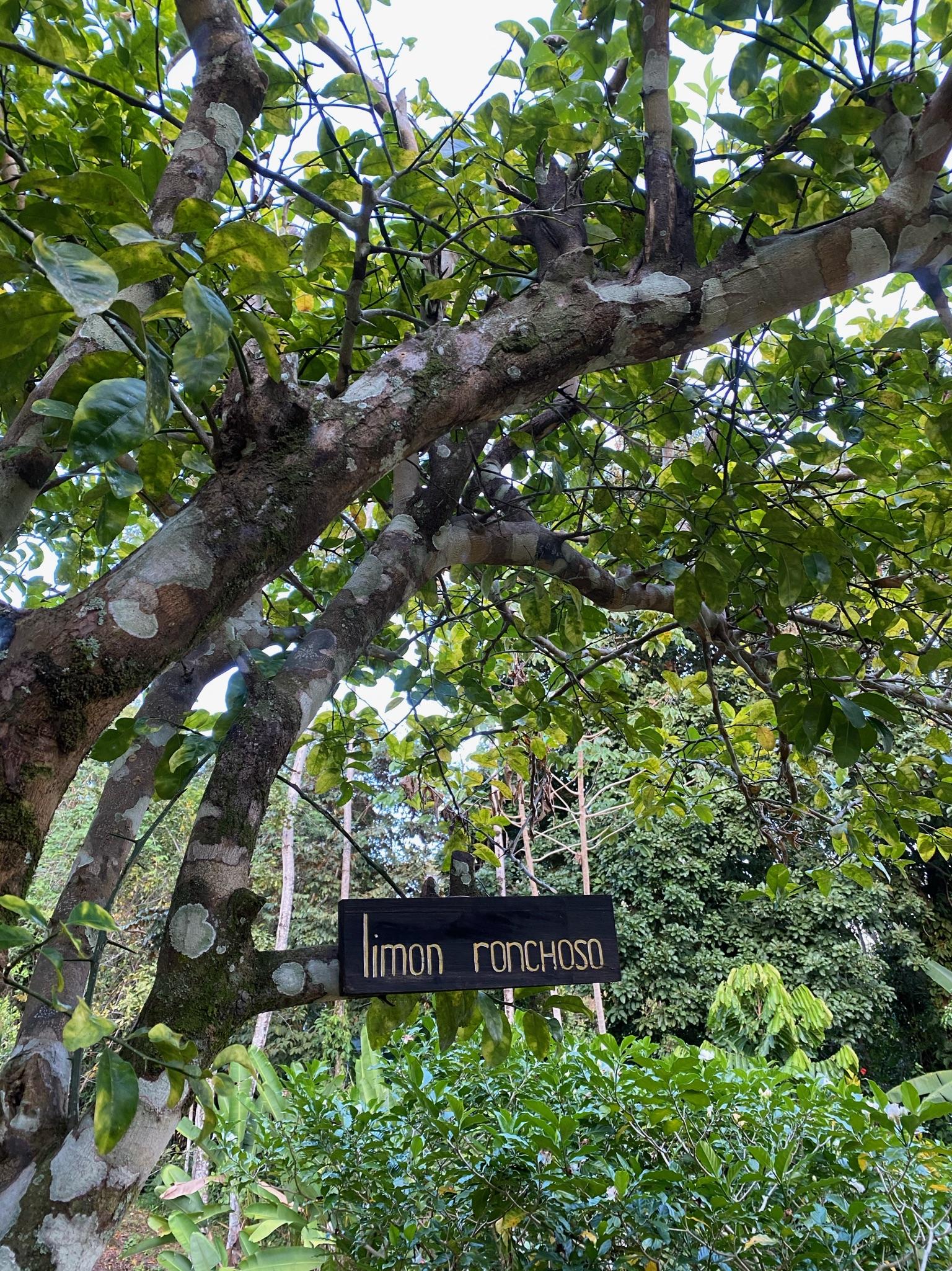 jungle isla pastores