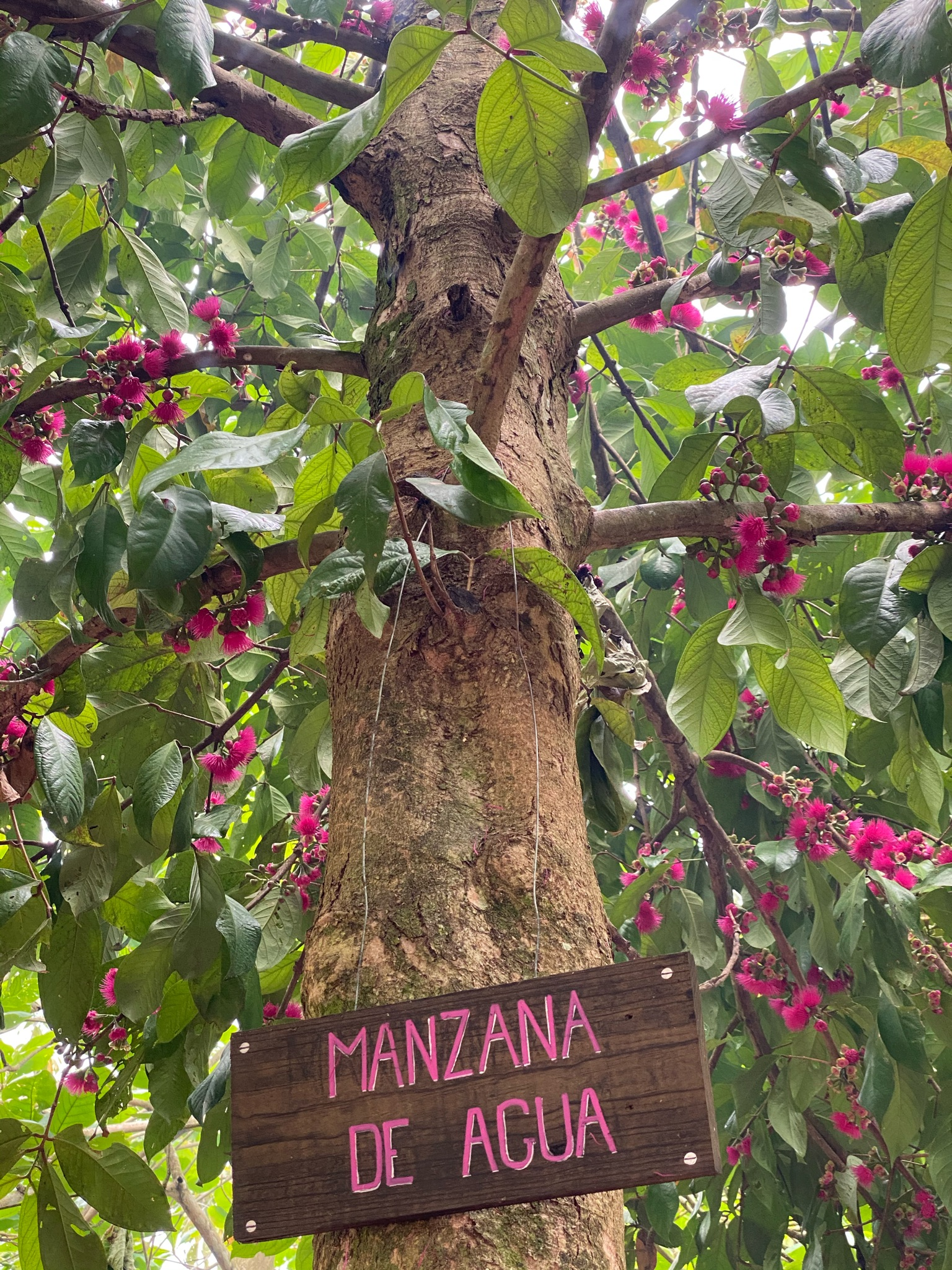 fruit isla pastores