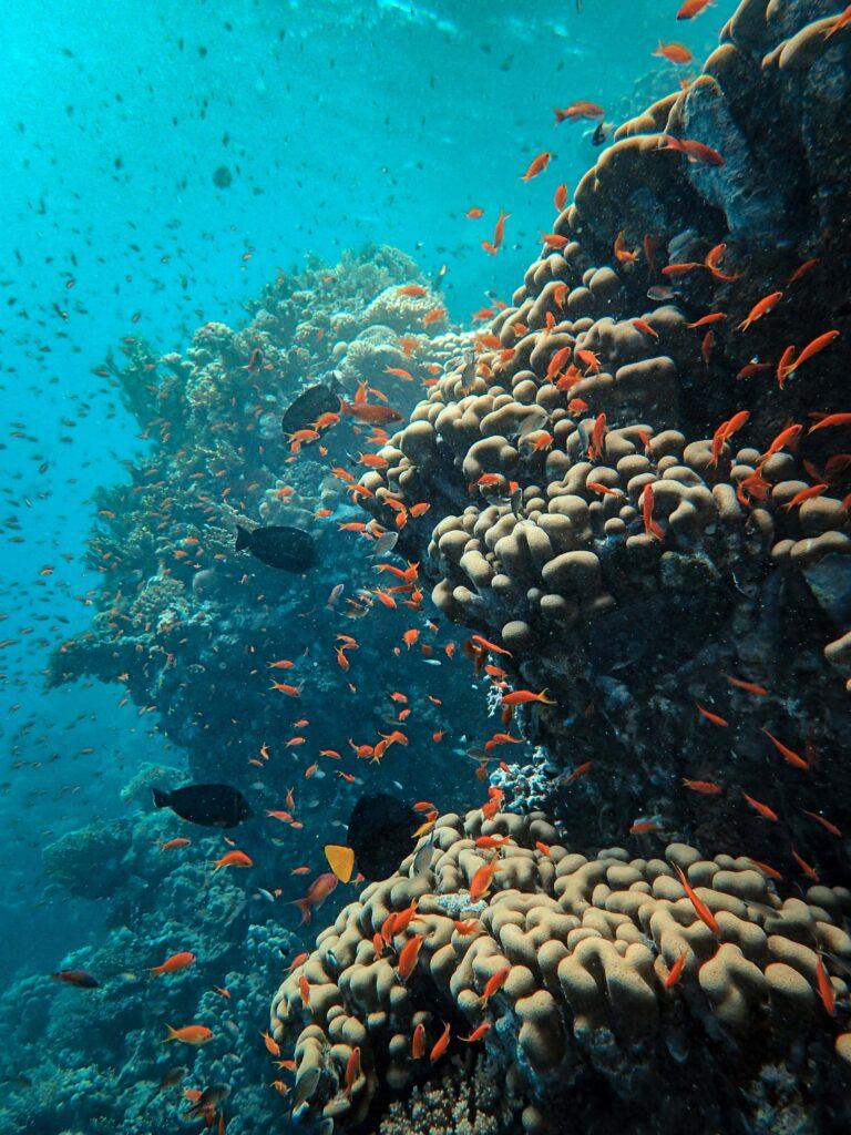 diving Bocas del toro