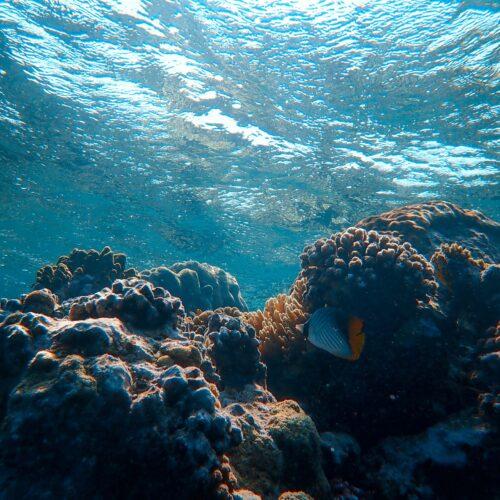 coral isla pastores